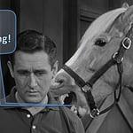 Mr. Ed, Horse, Monitoring Software, Zenoss