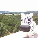 Zebra, Zenoss, Zenny, Austin TX, Austin, Texas